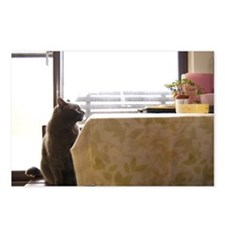 Russian blue cat look at  Postcards (Package of 8)