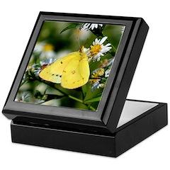 Cloudless Sulfur Butterfly Keepsake Box
