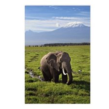 Elephant and Mt Kilamanja Postcards (Package of 8)