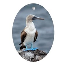 Blue footed booby Ornament (Oval)