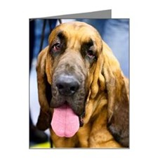 Bloodhound Note Cards (Pk of 20)