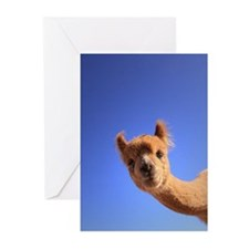A curious alpaca checks  Greeting Cards (Pk of 10)