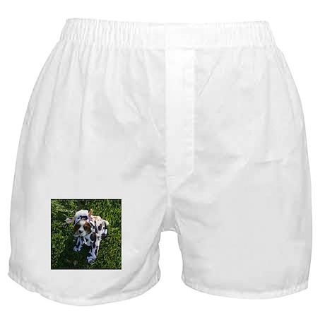 Cavalier Cow Boxer Shorts