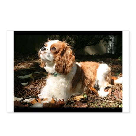 Cavalier King Charles Spaniel Postcards (Package o