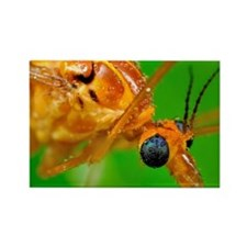 Crane Fly with dew drops Rectangle Magnet