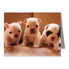 French bulldog puppy Note Cards (Pk of 20)