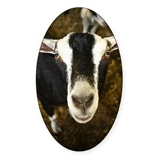A black and white goat strikes a po Decal