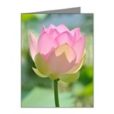 Pink lotus Note Cards (20 Pack)