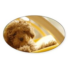 Poodle puppy on yellow chair Decal