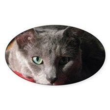 Russian blue cat on red pillow Decal