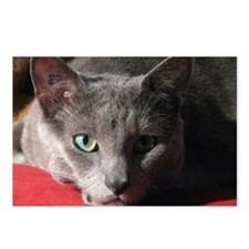 Russian blue cat on red p Postcards (Package of 8)
