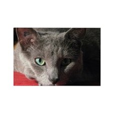 Russian blue cat on red pillow Rectangle Magnet