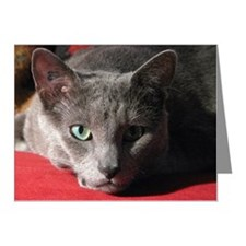 Russian blue cat on red pill Note Cards (Pk of 20)