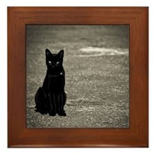 Black cat on street Framed Tile