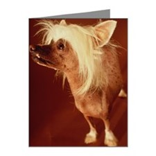 Latin name: Canis familiaris Note Cards (Pk of 20)