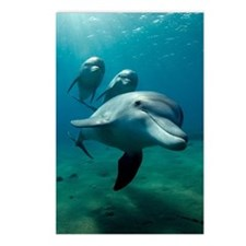 Dolphin flight Postcards (Package of 8)
