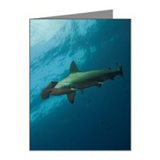 Hammerhead shark in Galapago Note Cards (Pk of 10)