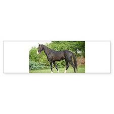 Humayun Marwari Stallion of Virendra Kankarlya Bum