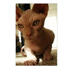Naked Cat Up-Close Postcards (Package of 8)