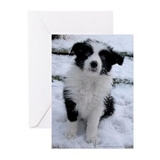 Puppy Border Collie Christmas Cards (Pac