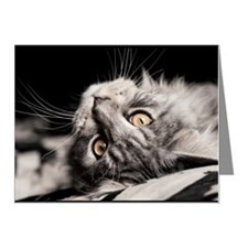 Maine Coon Sjinzu. Note Cards (Pk of 10)