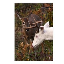 Brown whitetail fawn Postcards (Package of 8)