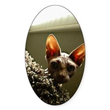 Hairless Cat Face with natura Decal