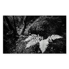 FERN IN FOREST Decal