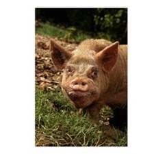 UGLY PIG IN THE FEDERATED Postcards (Package of 8)