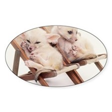 TWO FENNEC FOXES IN CHAIRS Decal