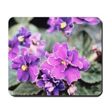 African violets Mousepad