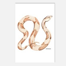 Copperhead Snake Postcards (Package of 8)