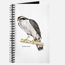 Northern Goshawk Bird Journal