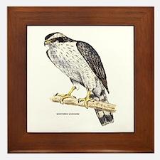 Northern Goshawk Bird Framed Tile