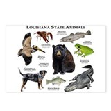 Louisiana Postcards