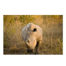 White Rhino, Sabi Sand Re Postcards (Package of 8)