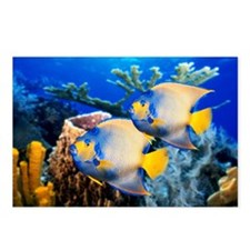 QUEEN ANGELFISH IN THE CA Postcards (Package of 8)