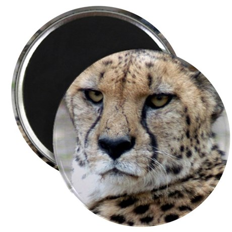 "Cheetah Gifts 2.25"" Magnet (10 pack)"