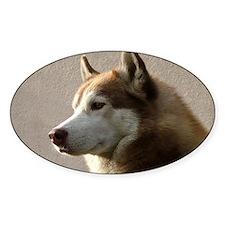Siberian Husky Dog Oval Decal