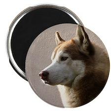 Siberian Husky Dog Magnet