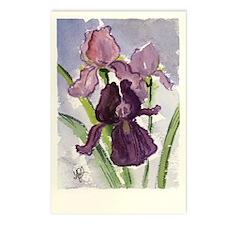 Plum Iris Postcards (Package of 8)