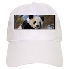 Giant Panda Bear 25 Cap