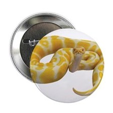 "Albino Ball Python 2.25"" Button"