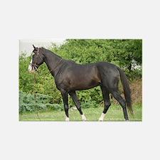Humayun Marwari Stallion of Virendra Kankarlya Rec
