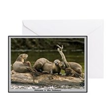 River Otter Note Cards (Pk of 10)