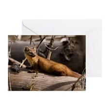 """Pine Martin"" (2) Greeting Cards (Pk of 10)"