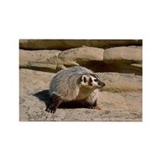 Badger on rocks Rectangle Magnet