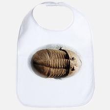 Asaphus trilobite Bib