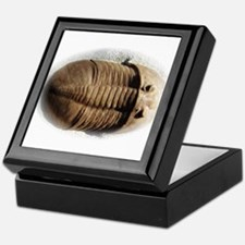 Asaphus trilobite Keepsake Box