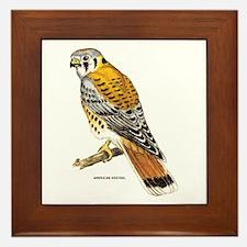 American Kestrel Bird Framed Tile